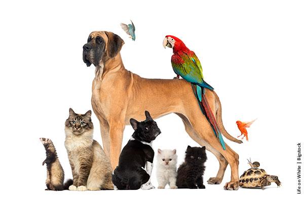 Prepare seu lar para conviver com animais de estimação