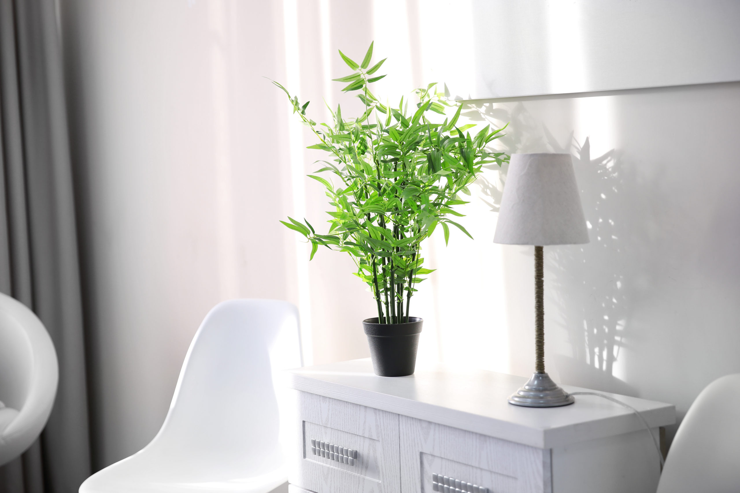 Apartamentos e a maneira de cultivar plantas