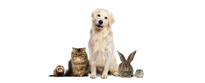 Animais em apartamento e as mudanças na rotina