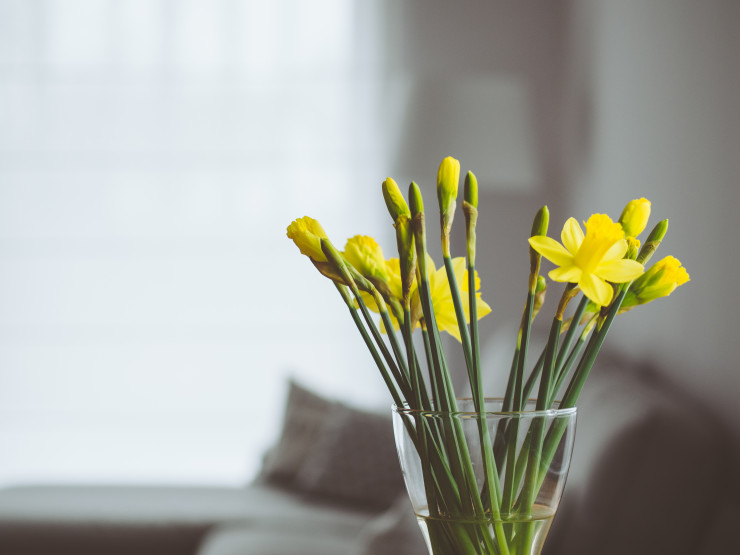 Flores para apartamento: um charme a mais para o seu lar
