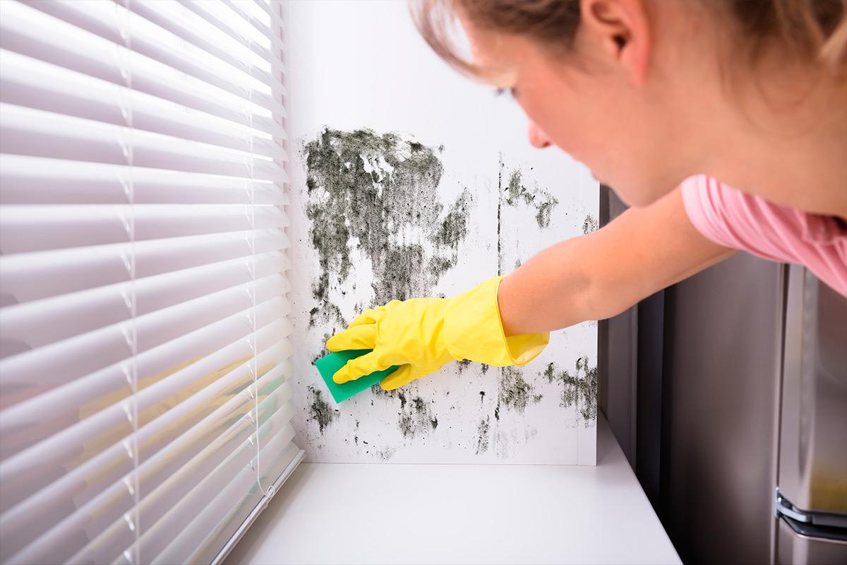 Como eliminar o mofo dentro de casa.