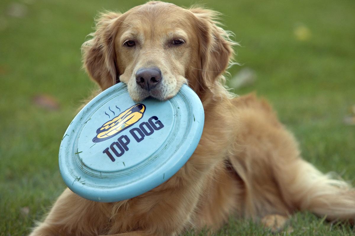 Pet friendly: saiba mais sobre esse diferencial dos novos empreendimentos